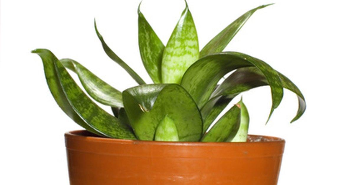Usos de las plantas ornamentales ehow en espa ol for Algunas plantas ornamentales