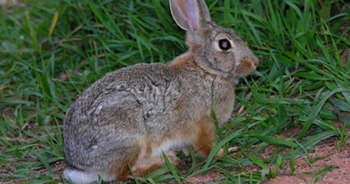 Homemade Rabbit Repellent With Cayenne Pepper Ehow Uk