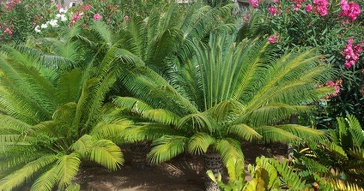 Do Ferns Need Acidic Soil Ehow Uk