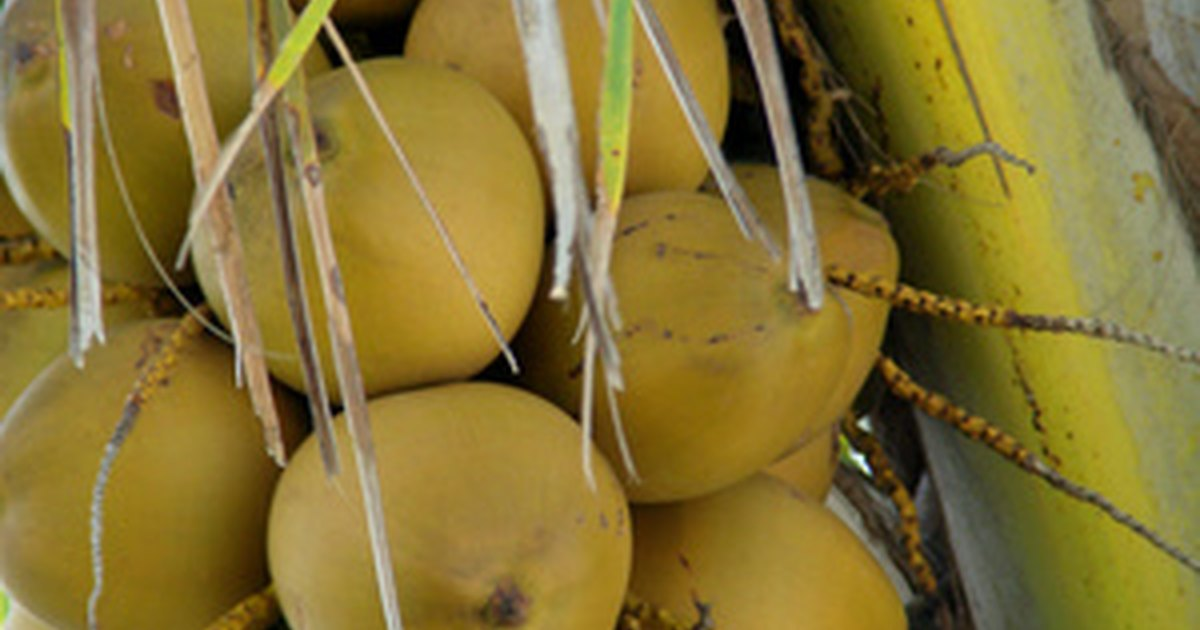 Response of oil palm roots to