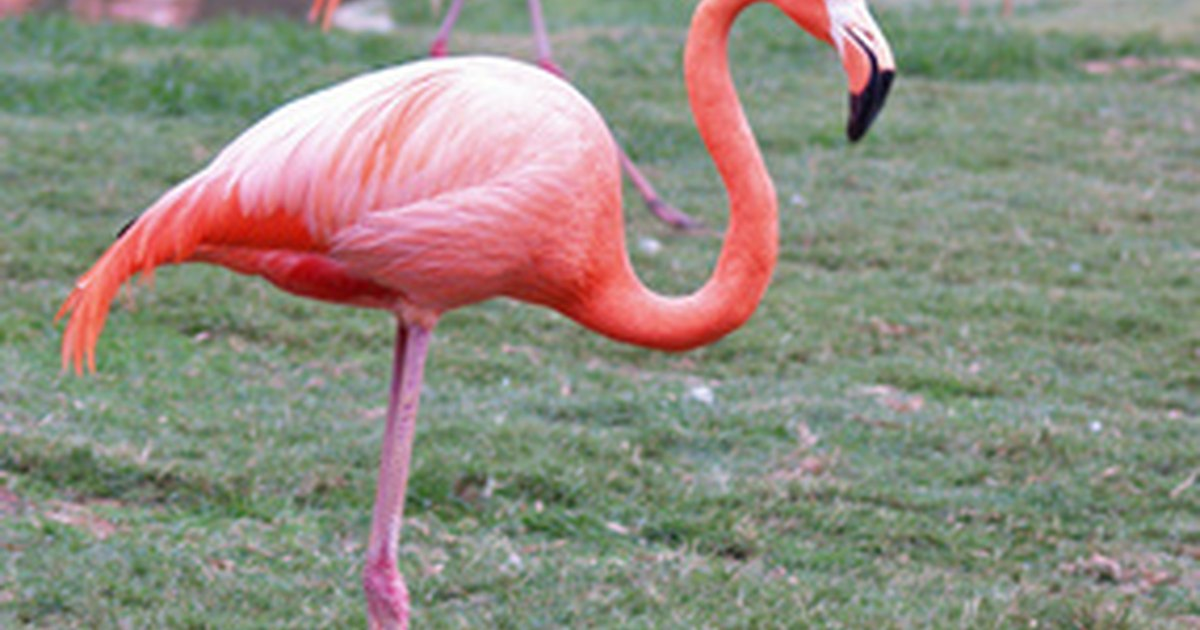 Where To Buy Plastic Flamingos At Least 3 Feet High Ehow Uk