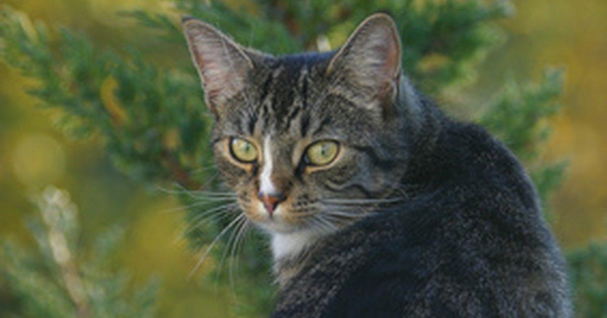 Plantas e flores venenosas para os gatos ehow brasil Plantas seguras para gatos