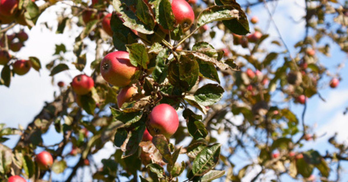 spraying schedule for fruit trees