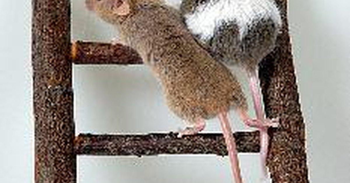 Remedio casero para matar ratones ehow en espa ol - Productos para matar ratones ...