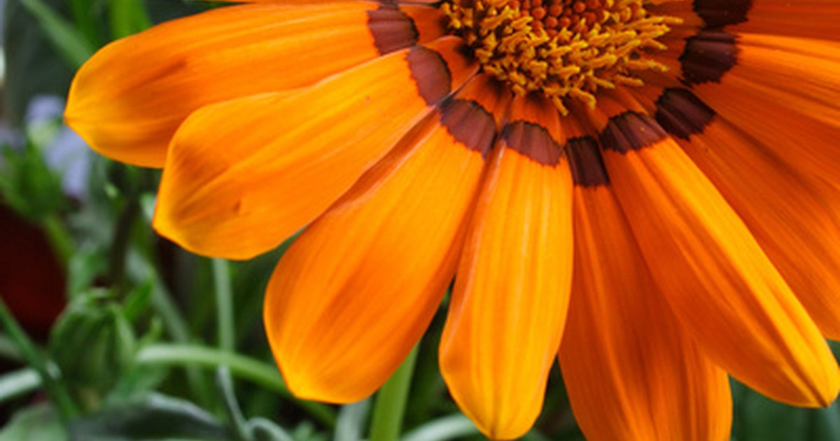 How To Plant Wild Flowers In Containers Ehow Uk