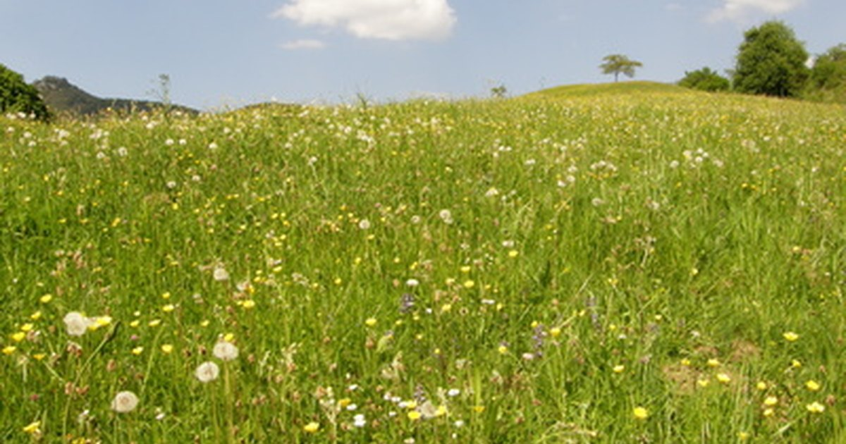10 facts about grassland biomes ehow uk