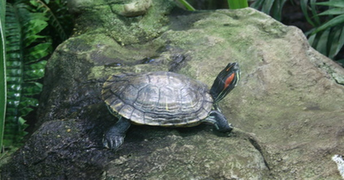 C mo construir un estanque interior para tortugas ehow - Estanques para tortugas ...