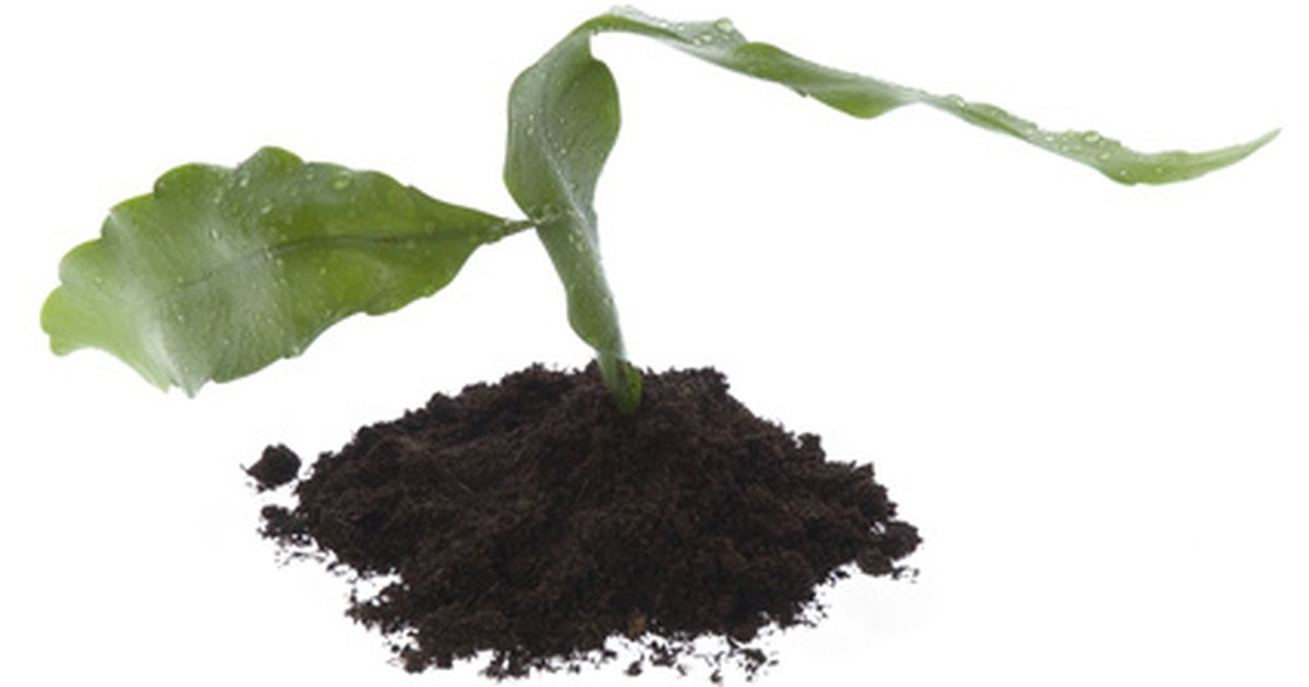 The difference between organic inorganic soil ehow uk for Organic soil uk