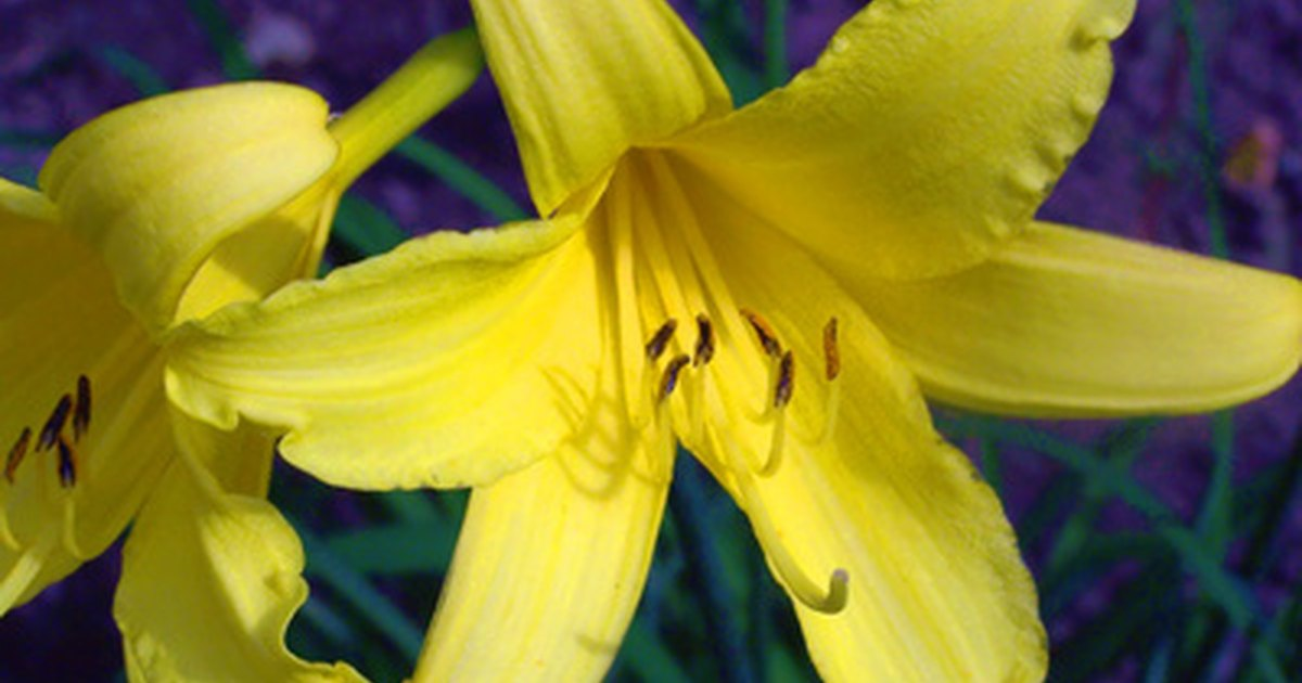 Which Perennials Bloom All Summer Long Ehow Uk