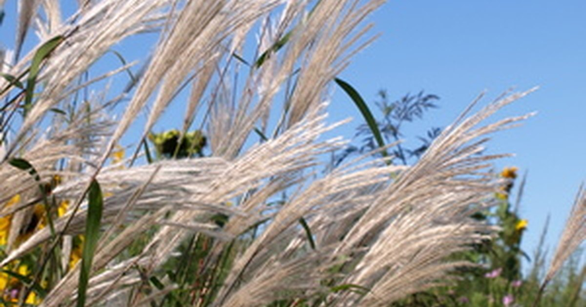 Ornamental grass landscaping ideas ehow uk for Landscaping ideas using ornamental grasses