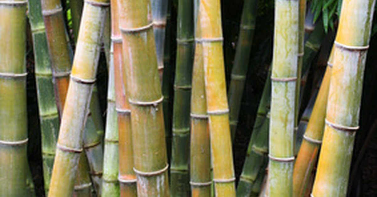 How to make bamboo canes ehow uk for Uses for bamboo canes