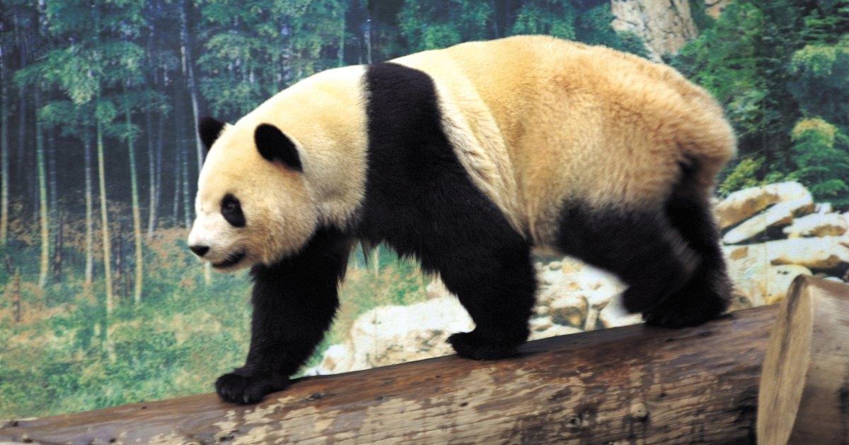 how to make a paper panda bear