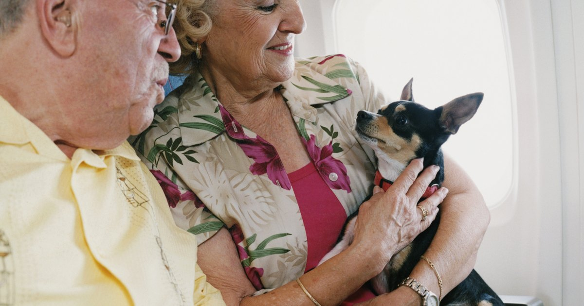 How to travel with your dog on an airplane ehow uk for Airlines that allow dogs in cabin