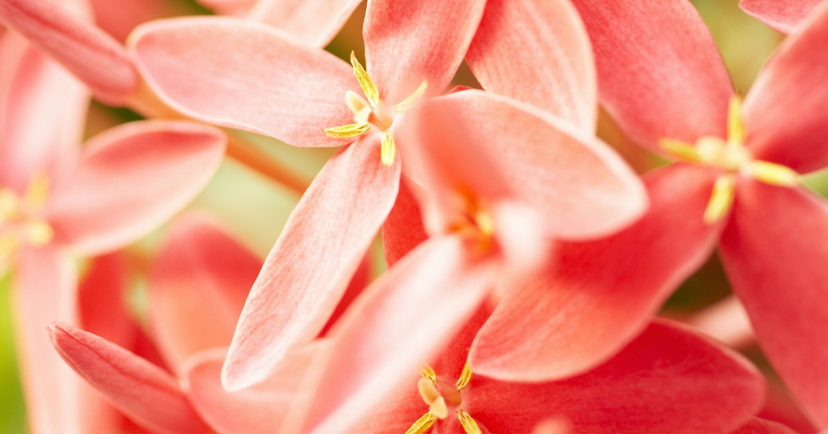 Caribbean Flowers: Guide To Caribbean Flowers