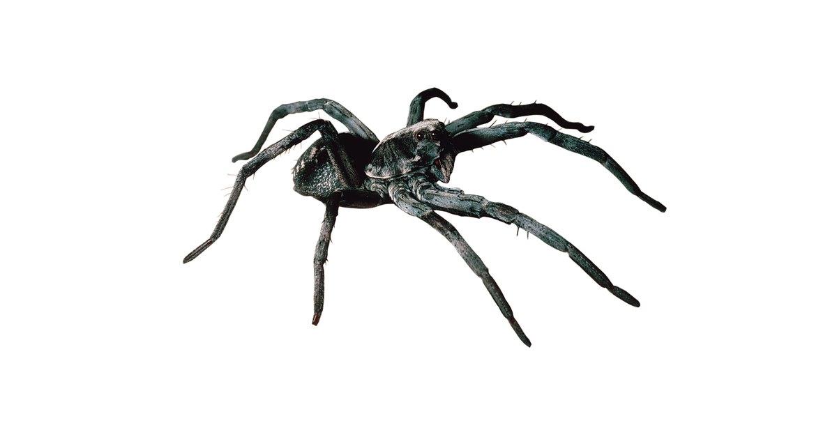 C mo eliminar las ara as de una casa ehow en espa ol - Eliminar aranas en casa ...