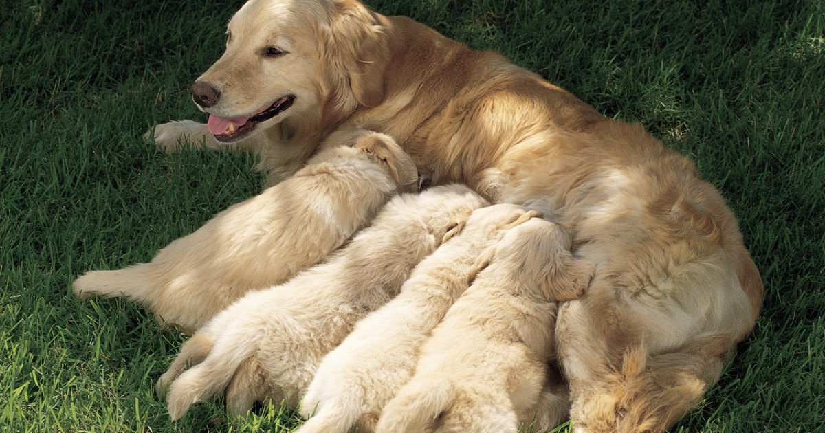 What Age Can Puppies Be Introduced To Food
