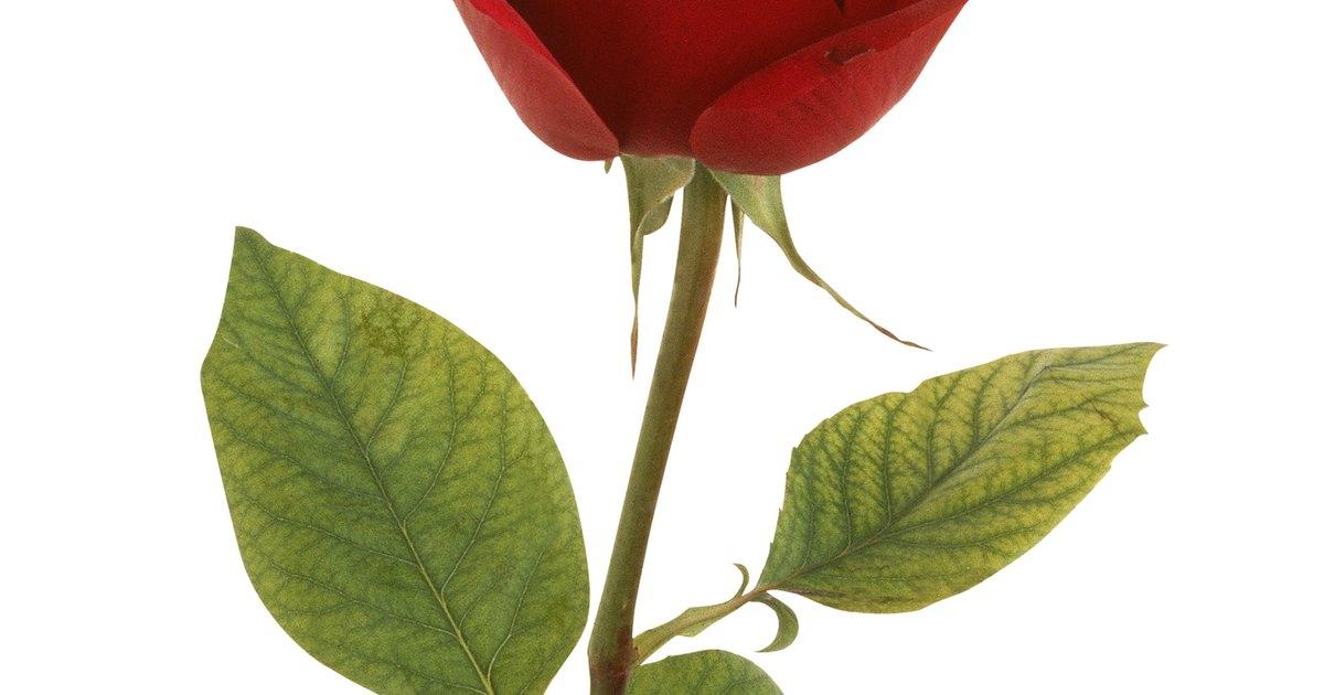 C mo hacer una rosa con tallo y hojas con papel ehow en - Como secar una rosa ...