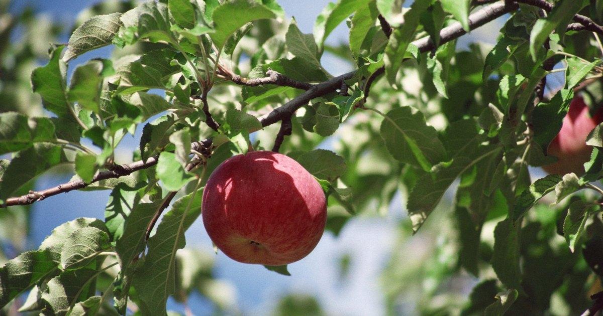 Apple-Peel Twigs Recipes — Dishmaps