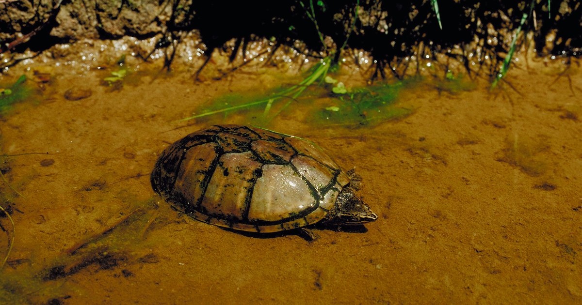 How To Care For A Dwarf Turtle Ehow Uk