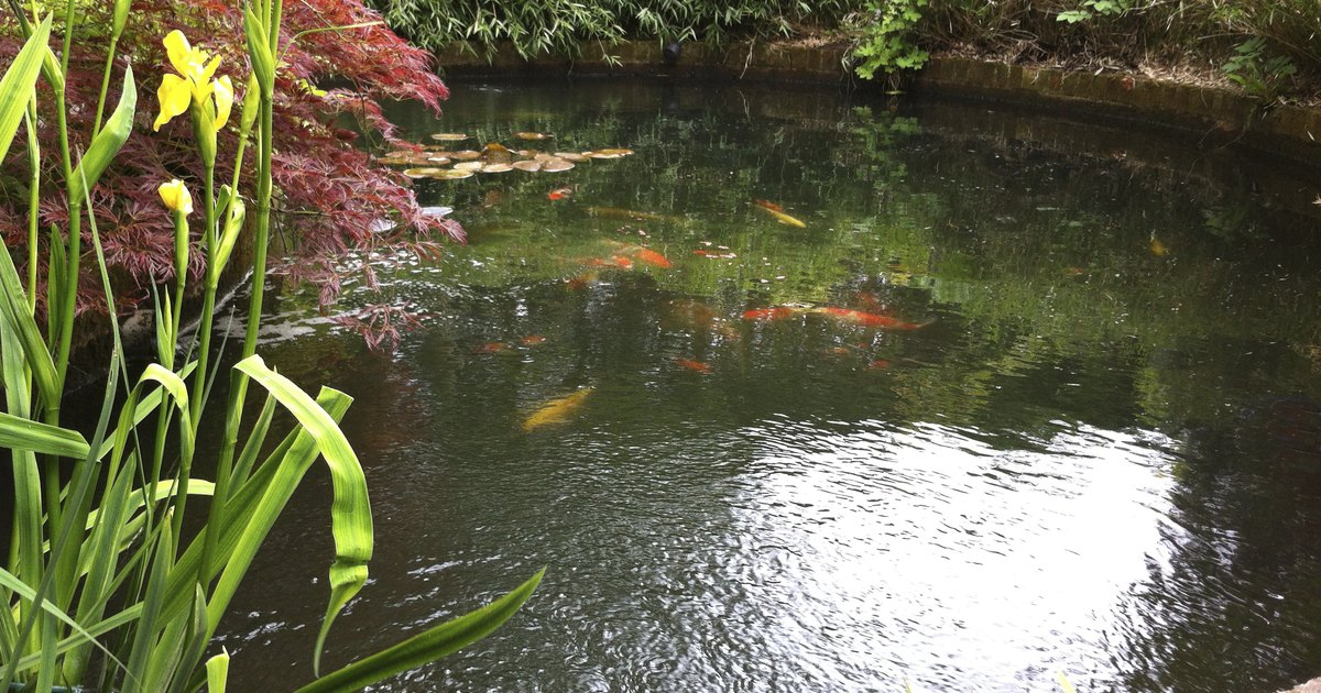 Homemade Koi Pond Filters Ehow Uk