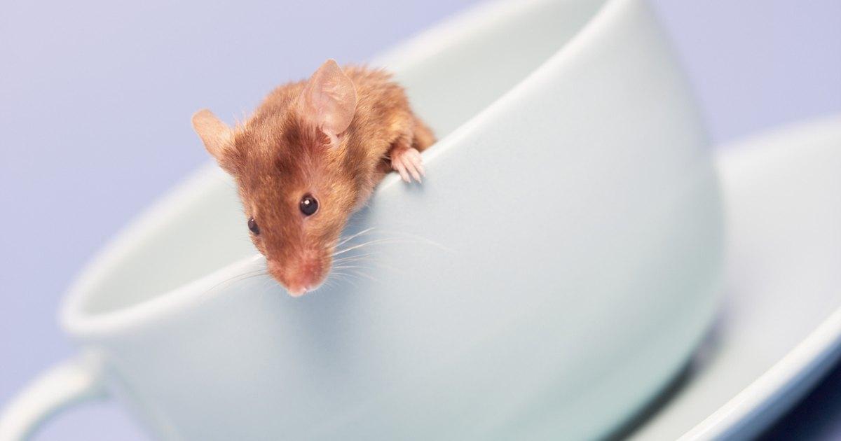C mo limpiar la orina de los ratones ehow en espa ol - Como evitar los ratones ...