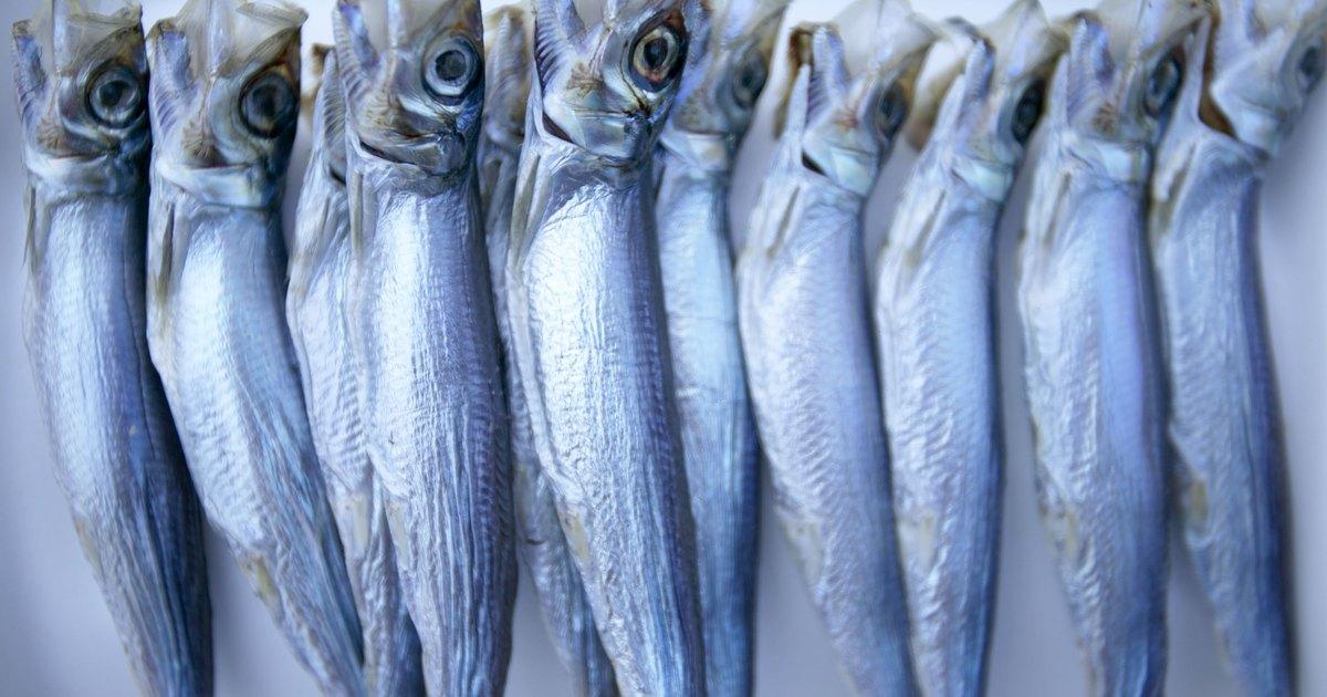 C mo cocinar sardinas congeladas ehow en espa ol for Cocinar en frances