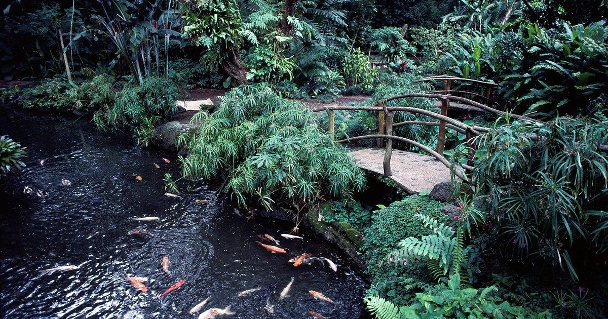 Interacciones entre plantas y peces en h bitats de agua for Peces de agua dulce para peceras sin oxigeno