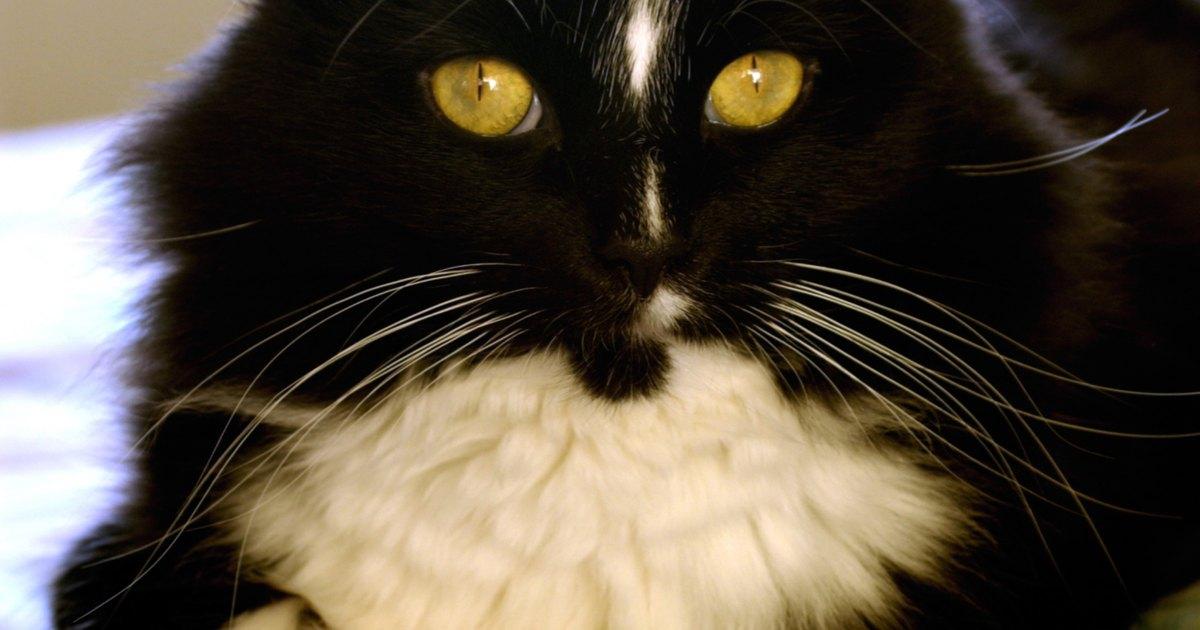 C mo quitar los pelos de gato de la lavadora ehow en espa ol - Como quitar los pelos de gato de la ropa ...