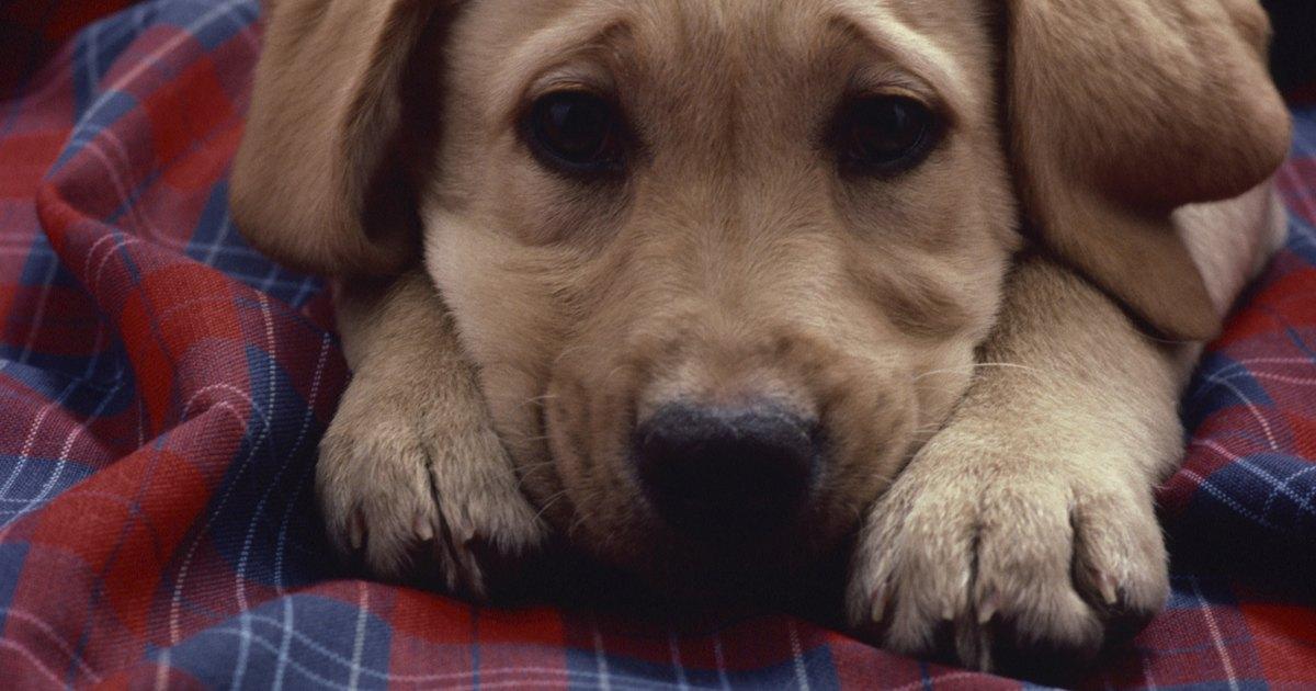 doggy style urine