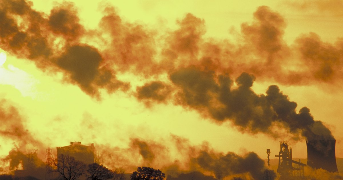 The effects of air pollution on animals for kids | eHow UK Air Pollution Effects On Animals Pics