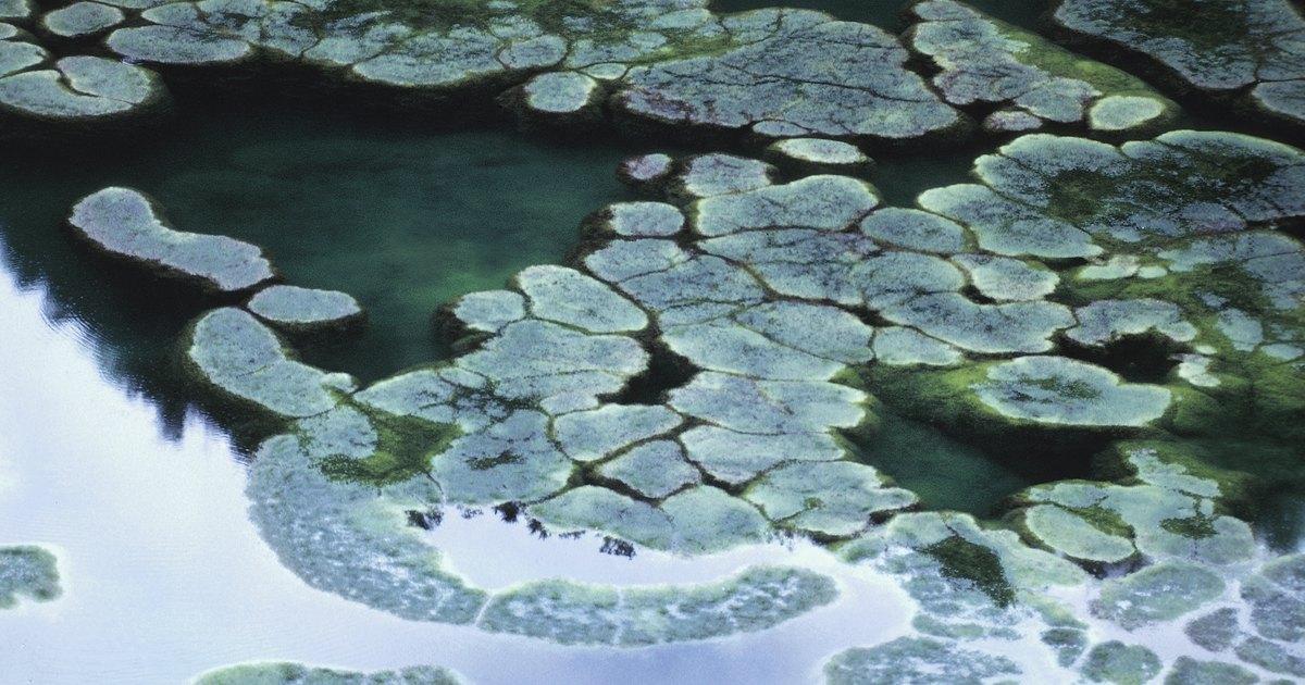 Does salt kill algae ehow uk for Salt in koi pond