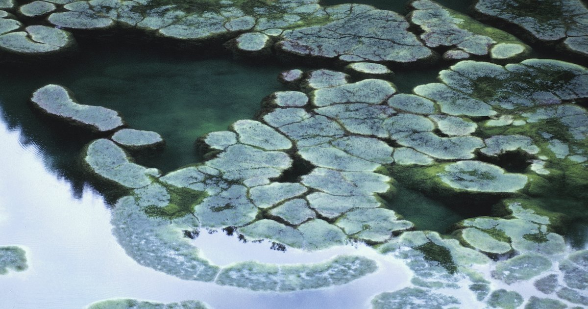 Does Salt Kill Algae Ehow Uk