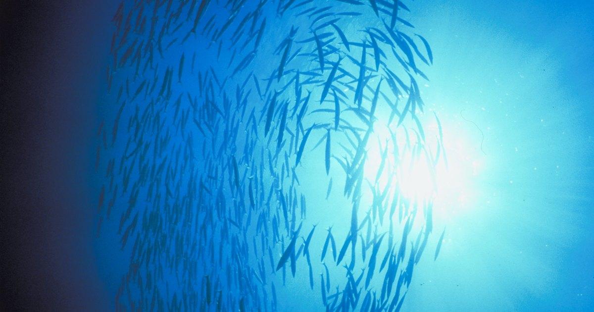 C mo cuidar los peces de agua dulce molly beb ehow en for Como cuidar peces de agua fria