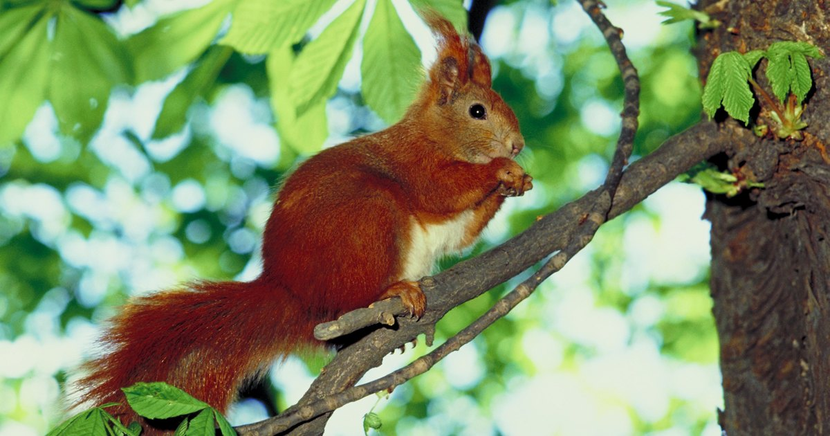 Using Plants To Deter Squirrels From Your Garden Ehow Uk
