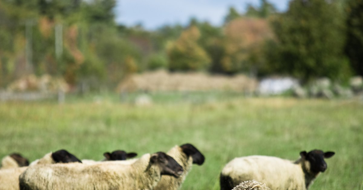 How To Make Your Own Livestock Electric Fence Ehow Uk