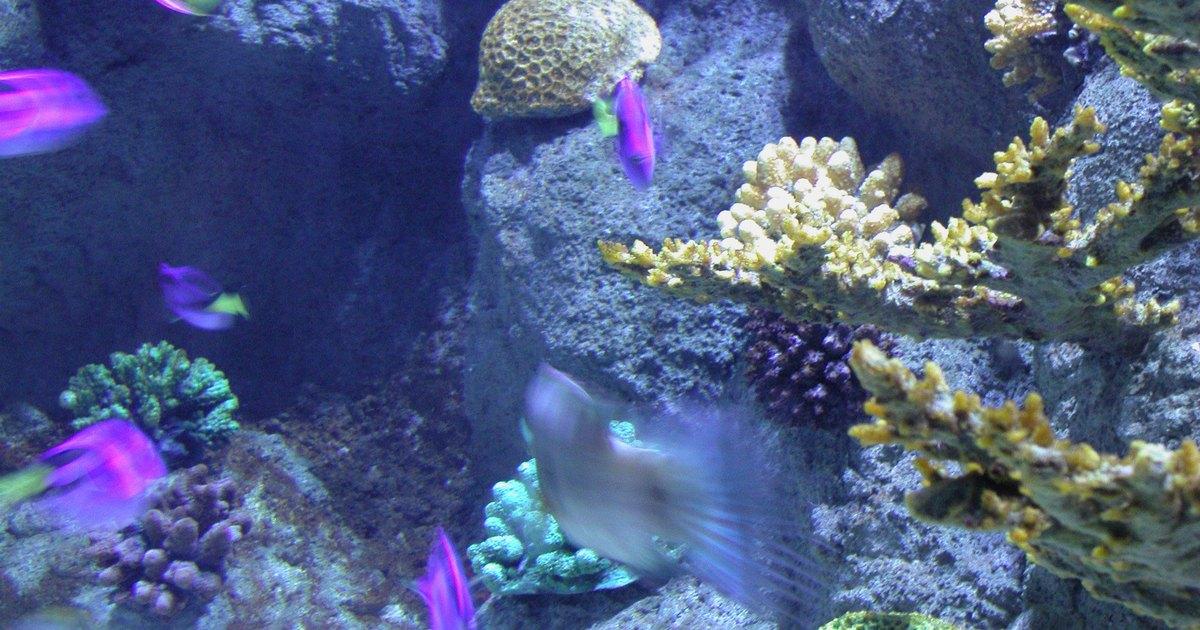Как сделать воду мягче в аквариуме