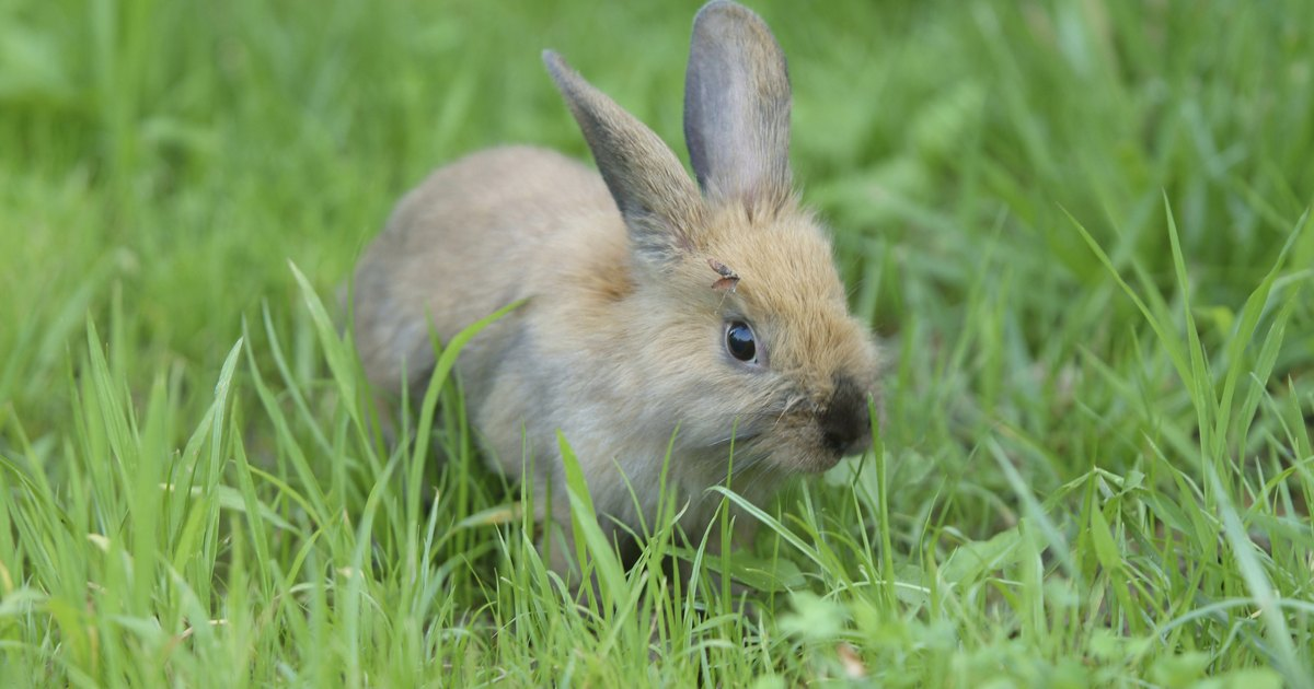 How To Keep Rabbits From Digging In My Yard Ehow Uk