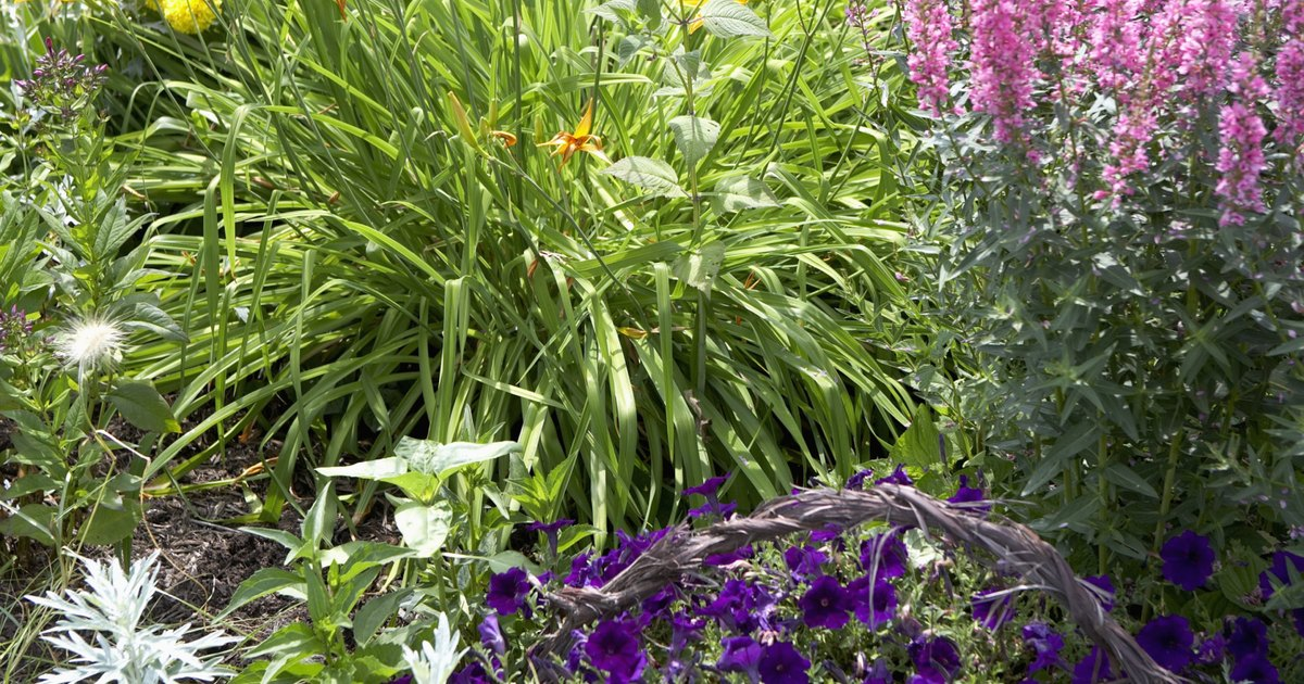 Short perennial flowers that bloom all summer ehow uk for Low maintenance summer flowers