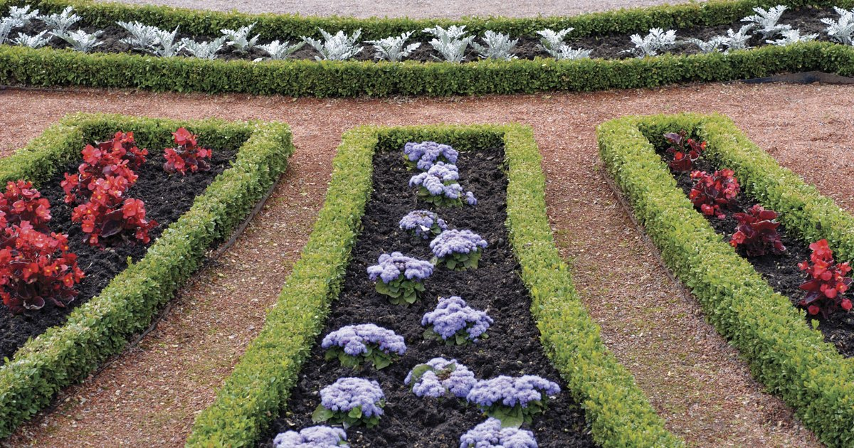 Types of low growing spreading evergreen shrubs ehow uk for Low growing plants for landscaping