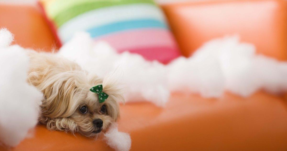 Natural Deterrent Dog Digging