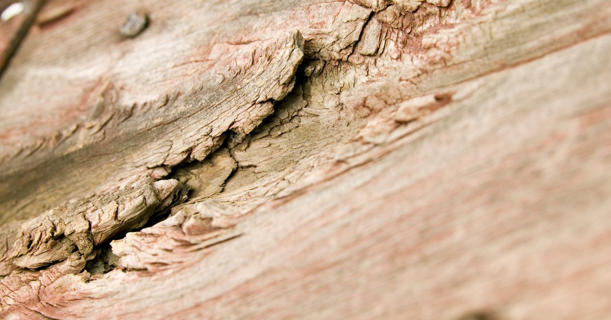 C mo reparar madera podrida ehow en espa ol - Reparar madera ...