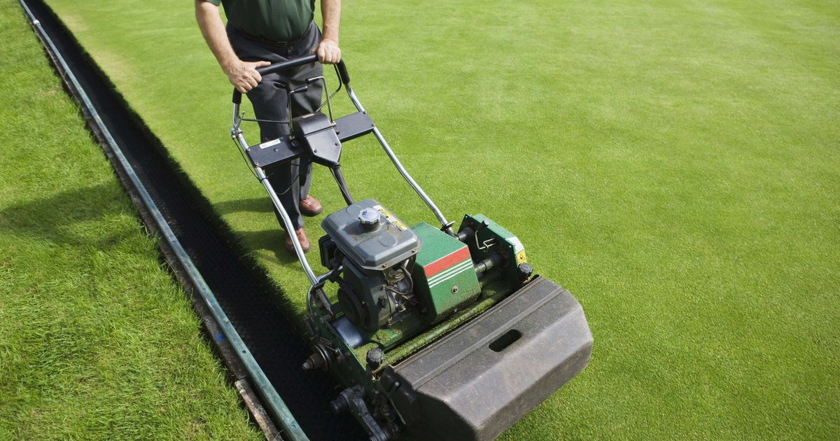 When Is The Last Time To Cut Grass Before Winter Ehow Uk