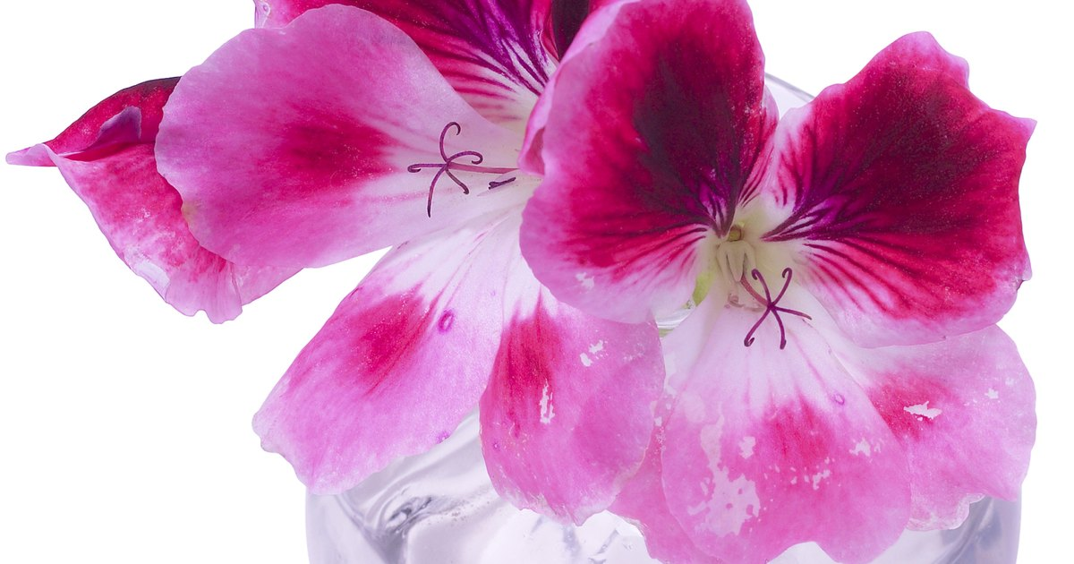 How To Preserve Flowers With Glycerine Ehow Uk