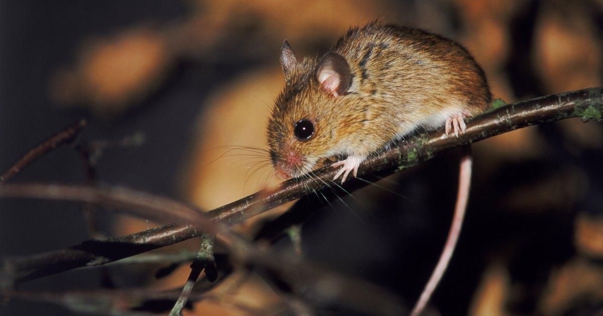 Muerden los ratones ehow en espa ol - Como evitar los ratones ...