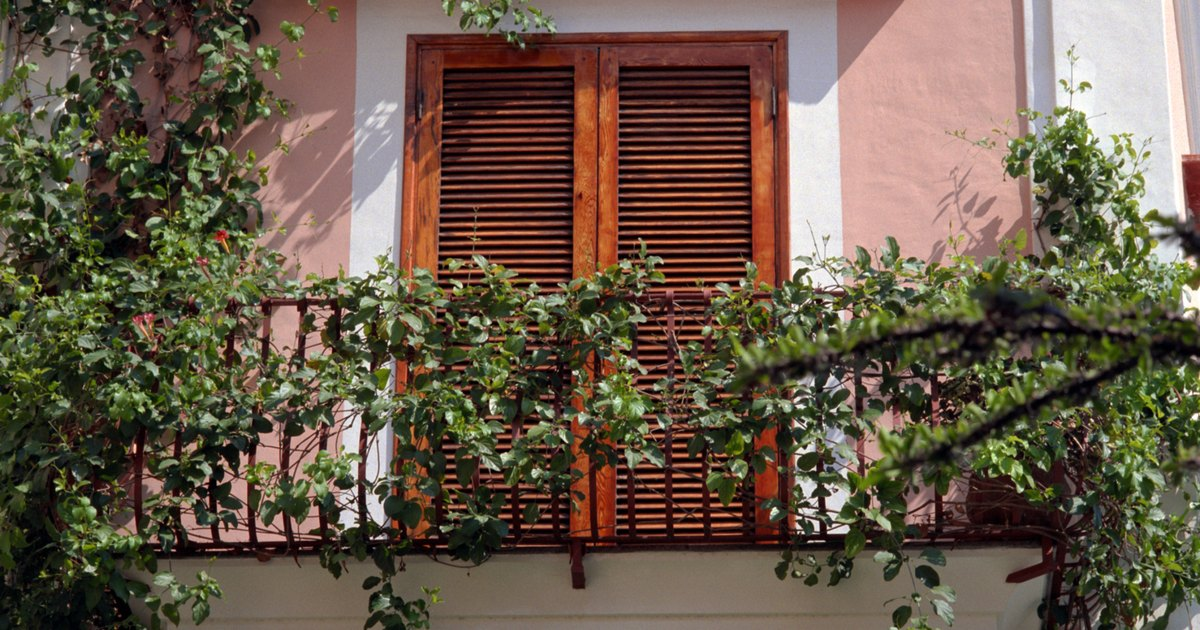 What Are Good Cascading Plants For Balconies Ehow Uk