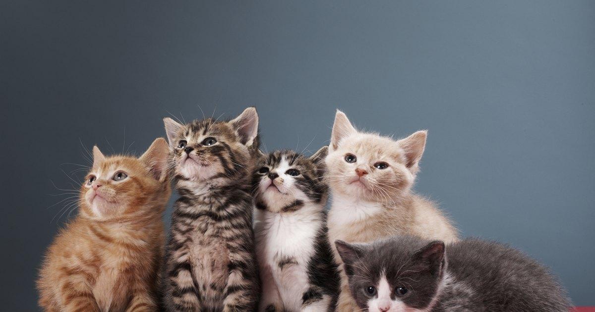 cat ear head phones