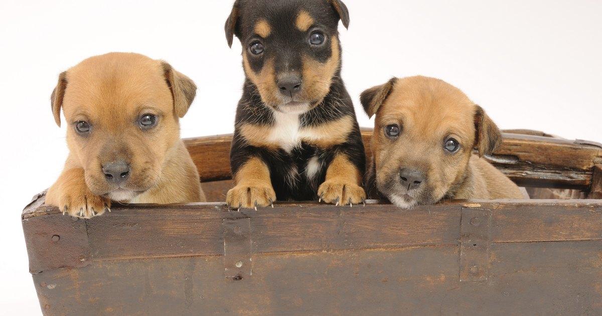 C mo hacer una caja de parto para perros ehow en espa ol for Piscinas para perros baratas