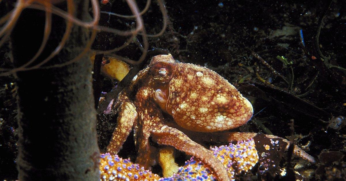 Octopus tank setup