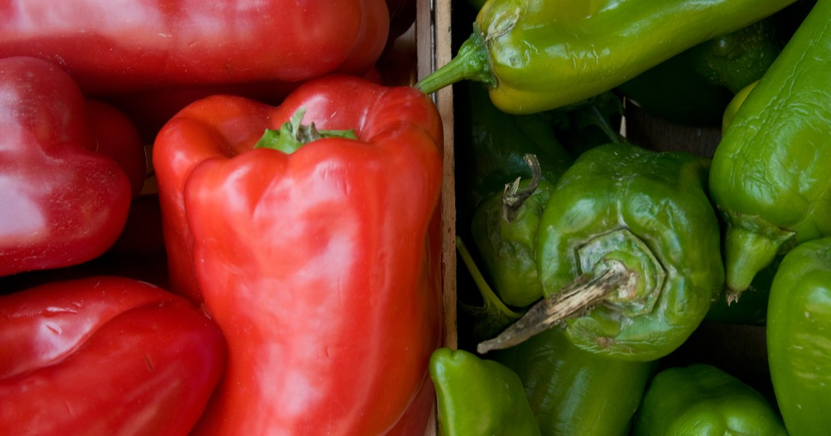 How To Grow Pepper Plants From Seeds Ehow Uk
