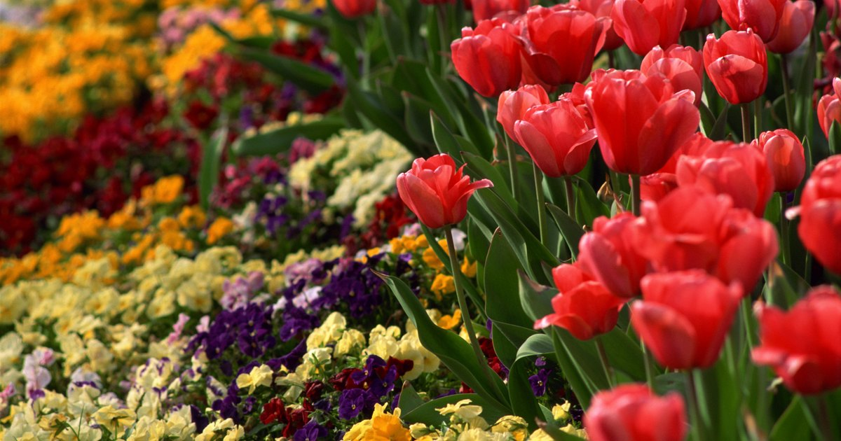 What flowers to plant in a large raised bed for low for Low maintenance flowers for flower beds